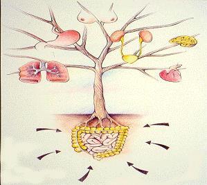 pulizia-intestino